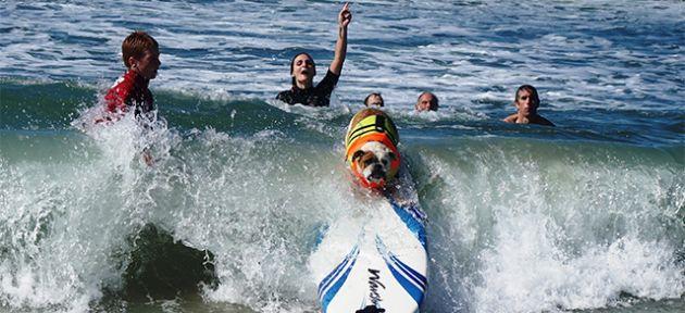 Bak sen şu sörf yapanlara!