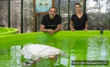 Haluk Levent, Meritta Deniz Kaplumbağaları Rehabilitasyon Merkezi hakkında bilgi aldı