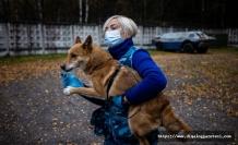 Sevimli dostlar iş başında, italya'nın Trentino-Alto Adige bölgesinde köpekler, okullarda Corona taraması yapacak