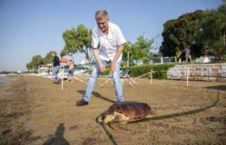 Meritta Deniz Kaplumbağaları Rehabilitasyon Merkezi'nde...