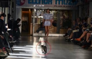 Sudi Etuz defilesinde podyumda yürüyen kedi herkesi...
