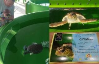 """Meritta, """"Deniz Kaplumbağası Evlat Edindirme""""..."""