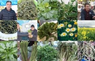 Doğanın bizlere sunduğu sebzeleri şimdi tüketmenin...
