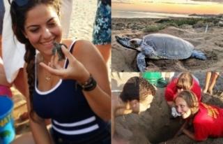 Kaplumbağaları koruma projesi için gönüllüler...