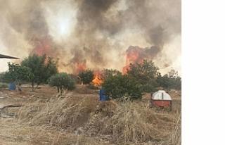 40 dönüm arazideki ağaçlar kül oldu