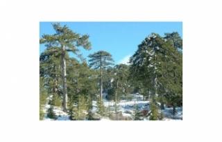 Trodos'a kar düştü