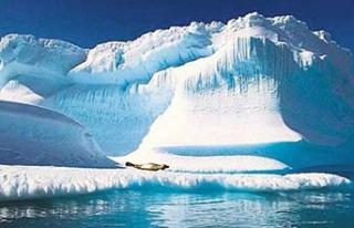 Kutuplarda 38 derece sıcaklık!