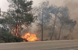Yangınlarda ihmal var mı?
