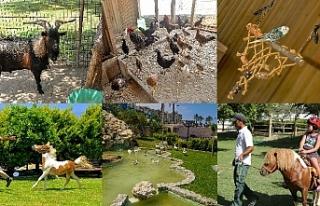Merit Park'ta misafirler için farklı bir dünya...