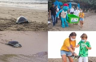 Deniz kaplumbağaları sağlıklarına kavuşturuluyor