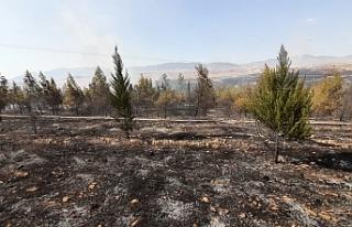 500 dönüm arazi yandı