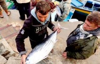 Ambargoya karşı ton balığı