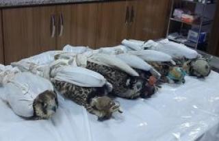 İllegal kuş ticareti!