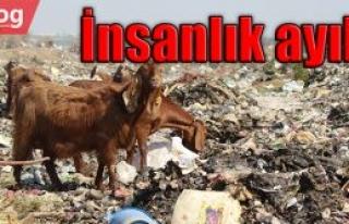 Oluşturulan çöplük, otlanan hayvanları zehirliyor