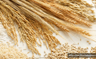 Tahıl alım fiyatları belirlendi
