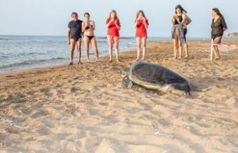 Meritta Deniz Kaplumbağaları Rehabilitasyon Merkezinde tedavi edilen yeşil kaplumbağa su ile yeniden buluştu
