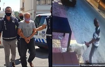 Köpeğe cinsel saldırıda bulunan adam hapse gönderildi