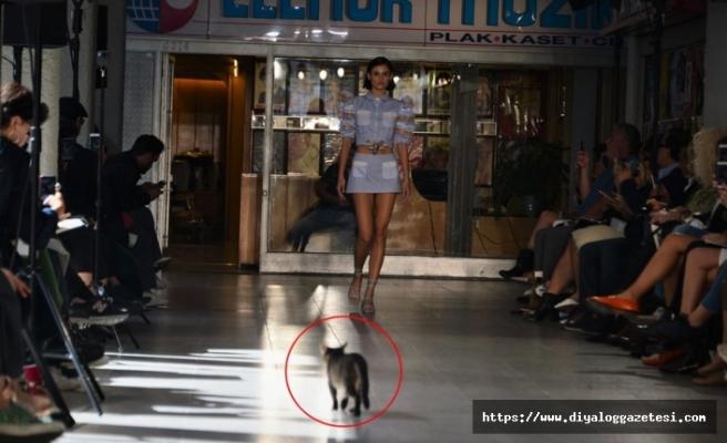 Sudi Etuz defilesinde podyumda yürüyen kedi herkesi gülümsetti
