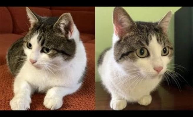 Rusya'da 'doğaüstü güçleri olan' bir kedi satışa çıkarıldı