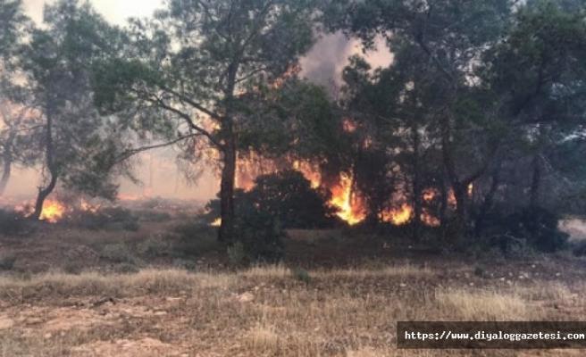 8 günde 67 yangına müdahale edildi