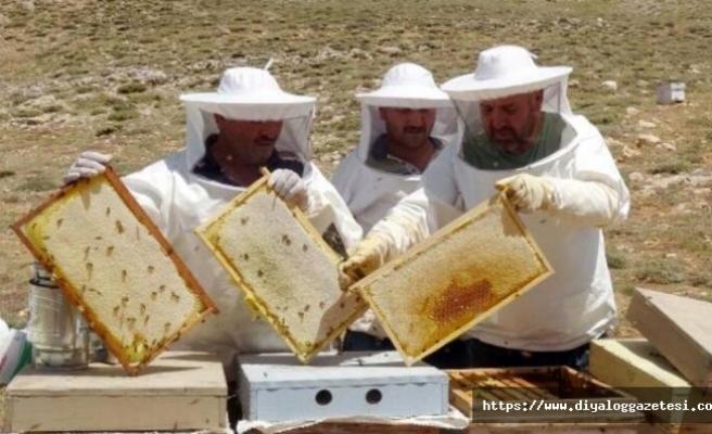 Arıcılar, destek için kayıt yaptırmalı