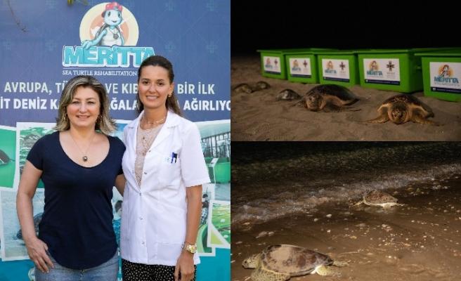 İlk kez 5 deniz kaplumbağası birlikte mavi özgürlüğe kavuştu