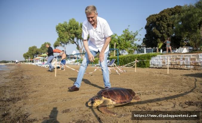 Meritta Deniz Kaplumbağaları Rehabilitasyon Merkezi'nde tedavi edilen 14'üncü kaplumbağa mavi sularla yeniden buluştu